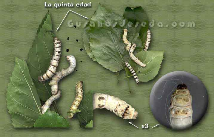 gusanos.jpg (69259 bytes)